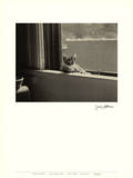 Kitty in the Window Poster von Jim Holmes