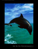 Bottlenose Dolphin Poster Art and the Environment