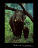 Asian Elephant Posters by Konrad Wothe