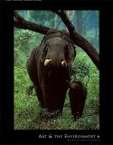 Asian Elephant Prints by Konrad Wothe