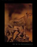 Afrikanische Geparden Poster von Gerry Ellis
