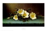 Vier Cherokee-Rosen Poster von Martin Johnson Heade