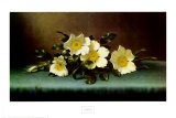 Four Cherokee Roses Print by Martin Johnson Heade