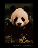 Giant Panda Feeding on Bamboo Prints by Gerry Ellis