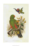 Gould Parrots I Giclee Print by John Gould