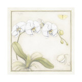 White Orchid Art by Meg Page