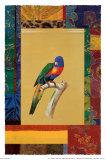 Australischer Papagei Poster von Jaggu Prasad