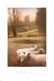 Ruthies Schafe Kunstdrucke von Barbara Kalhor