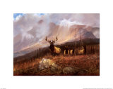 Bookcliffs Elk II Kunstdrucke von Michael Coleman