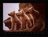 Wolfswelpen Kunstdrucke von Jim Brandenburg