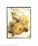 Ranunculus Bouquet Poster van Rosanne Olson