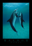 Danse Des Dauphins Prints by Bob Talbot