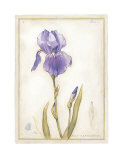 Purple Iris I Posters by Meg Page