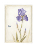 Purple Iris II Print by Meg Page