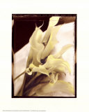 Calla Lilies Detail Posters by Rosanne Olson