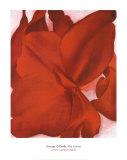 Rote Cannas Kunstdrucke von Georgia O'Keeffe