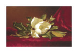 The Magnolia Flower Art by Martin Johnson Heade