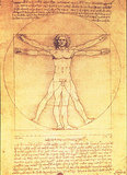Leonardo da Vinci - Vitruvian Man Proportions of the Human Figure - Reprodüksiyon