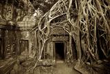 Strangler Fig Tree Roots Devour Temple Ruins at Ta Prohm Temple Fotografisk trykk av Jim Richardson