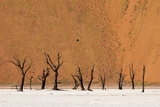 Camel Thorn Trees Against Red Sand Dunes in the Sossusvlei Photographic Print by Sergio Pitamitz