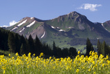 Majestic Mountain Peaks Behind Evergreens and Yellow Wildflowers Photographic Print by Robbie George