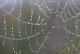 A Spider Web Lined with Dew Drops in the Early Morning Photographic Print by Robbie George