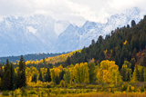 Cottonwood and Aspen Trees in Autumn Photographic Print by Tom Murphy