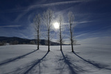 Backlit Trees Cast Shadows on a Winter Landscape Photographic Print by Raul Touzon