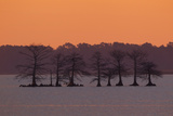 A Colorful Sunrise Over Silhouetted Cypress Trees in Lake Mattamuskeet Photographic Print by Robbie George