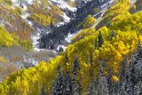 A Snow-blanketed Valley with Golden Aspen Trees and Evergreens Photographic Print by Robbie George