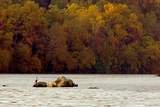 A Duck Rests on One of the Three Sisters Islands in the Potomac Photographic Print by Rex A. Stucky