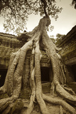 Strangler Fig Tree Roots Engulf Temple Ruins at Ta Prohm Temple Photographic Print by Jim Richardson
