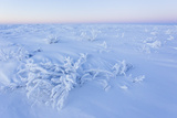 Frozen Shrubs, Ice and Snow in Sub-zero Arctic Temperatures Fotografisk tryk af Mike Theiss