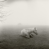 A Horse Resting in Heavy Fog Photographic Print by Stephen Alvarez