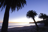 Palm Trees Silhouette at Refugio State Beach in Gaviota, California Photographic Print by Rich Reid