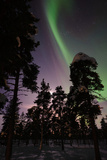 Northern Lights in Jukkasjarvi, Sweden Photographic Print by Lola Akinmade Akerstrom