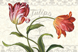 Tulipa Botanica I Cream Art by Lisa Audit
