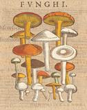 Funghi Velenosi II Art by Wild Apple Portfolio