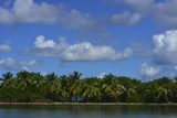 Coconut Palms Along the Shore of Samana Peninsula Fotografisk tryk af Raul Touzon