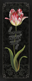 Tulipa Botanica III Prints by Lisa Audit