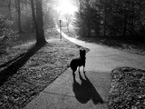 A Pet Dog on a Sidewalk Looks Down a Hill in the Early Morning Photographic Print by Stephen Alvarez