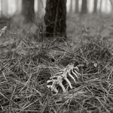White-tailed Deer Bones Nestled in Pine Needles in a Foggy Forest Photographic Print by Stephen Alvarez