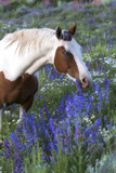 Portrait of a Horse in a Field of Purple Wildflowers Photographic Print by Robbie George