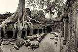 Strangler Fig Tree Roots Engulf Temple Ruins at Ta Prohm Temple Fotografisk trykk av Jim Richardson
