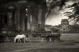 A Horse Grazes Among Ruins on the Grounds of Angkor Wat Photographic Print by Jim Richardson