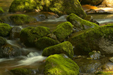 Moss Covered Rocks in the Piney River Photographic Print by Medford Taylor