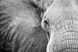 Close Up of An Elephant's Face Fotografisk tryk af Robin Moore