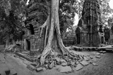 Lichen and Strangler Fig Trees Engulf Temple Ruins at Ta Prohm Temple Photographic Print by Jim Ricardson