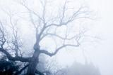 Skeletal Oak Tree Branches, Quercus Species, in Heavy Fog Photographic Print by Stephen Alvarez