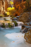 Sunlight Illuminates Cottonwoods Above Havasu Creek and Its Falls Fotografie-Druck von Derek Von Briesen
